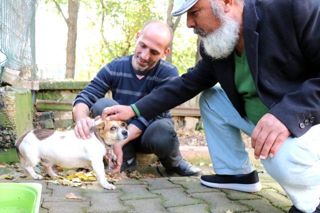 Nefessiz kalan köpek, kalp masajıyla hayata döndü.